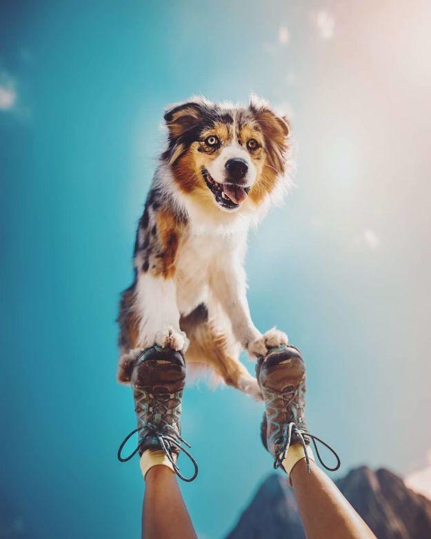 5c07def35273b-BnIxWyhh_y2-png__880 50 Beautiful Photos Of Dogs Taken By Czech Photographer Kristýna Kvapilová Photography Random