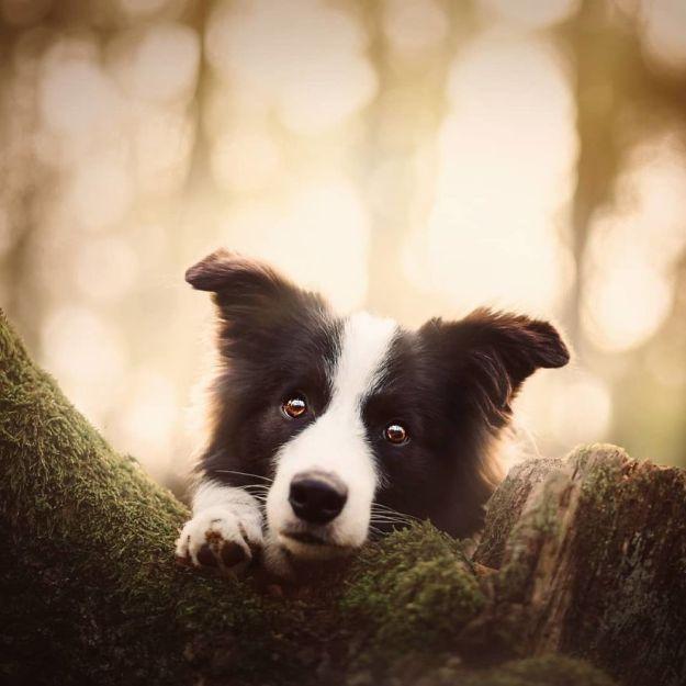 5c07def3ae70d-BpBq5HtBFtj-png__880 50 Beautiful Photos Of Dogs Taken By Czech Photographer Kristýna Kvapilová Photography Random