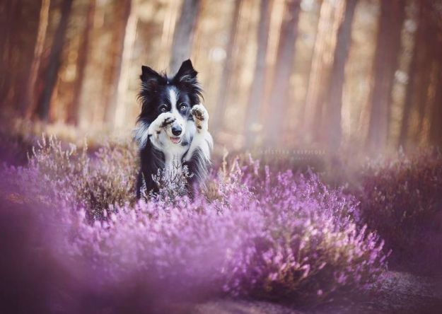 5c07def3ebaf2-BYENSPjAdZu-png__880 50 Beautiful Photos Of Dogs Taken By Czech Photographer Kristýna Kvapilová Photography Random