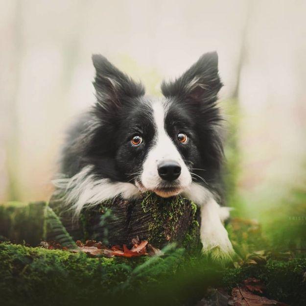 5c07def46de07-BgBz_segNcp-png__880 50 Beautiful Photos Of Dogs Taken By Czech Photographer Kristýna Kvapilová Photography Random