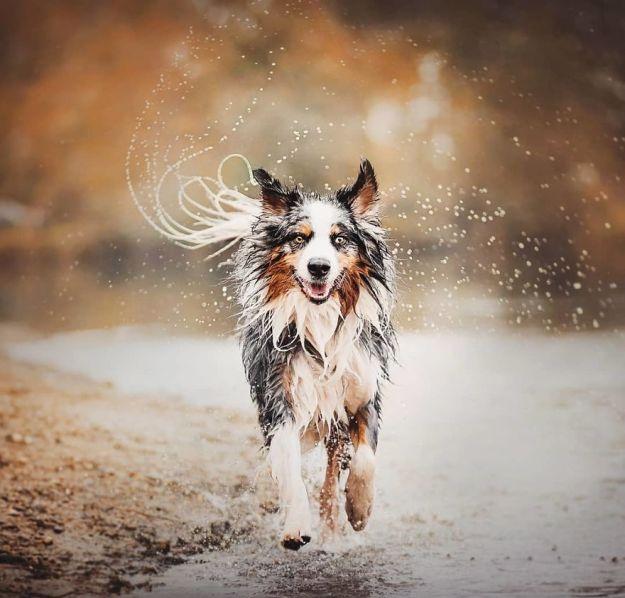 5c07def5ce910-BitgGSCBJAg-png__880 50 Beautiful Photos Of Dogs Taken By Czech Photographer Kristýna Kvapilová Photography Random