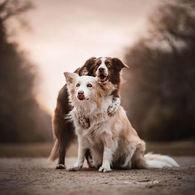 5c07def5f330c-BjRzPLYhUKp-png__880 50 Beautiful Photos Of Dogs Taken By Czech Photographer Kristýna Kvapilová Photography Random