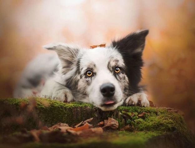 5c07def61c7e3-BexyDOQA6rc-png__880 50 Beautiful Photos Of Dogs Taken By Czech Photographer Kristýna Kvapilová Photography Random
