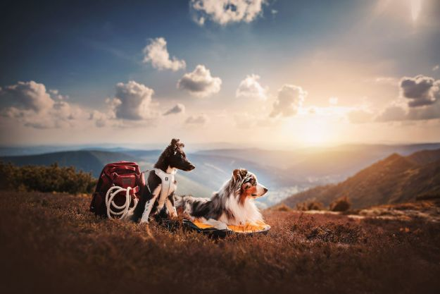 5c07def6776dd-Mountain-crew-5bfc5329c290b__880 50 Beautiful Photos Of Dogs Taken By Czech Photographer Kristýna Kvapilová Photography Random