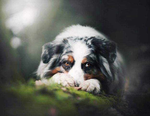 5c07def6ea92b-Bfyaa4bAydT-png__880 50 Beautiful Photos Of Dogs Taken By Czech Photographer Kristýna Kvapilová Photography Random