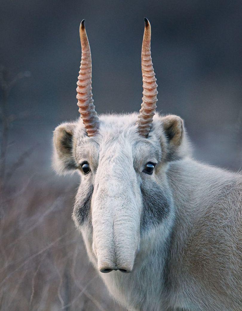 5c136d151b34d endangered animals tim flach 5a45fa2a48ab2  700 - Fotos Incríveis de animais que podem em breve ser extintos