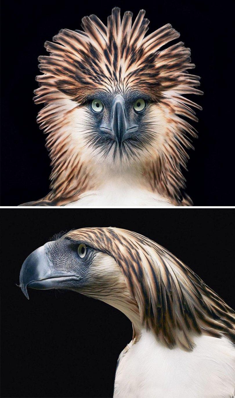 5c136d1576da3 endangered animals tim flach 5a45f72fa4ba0  700 - Fotos Incríveis de animais que podem em breve ser extintos