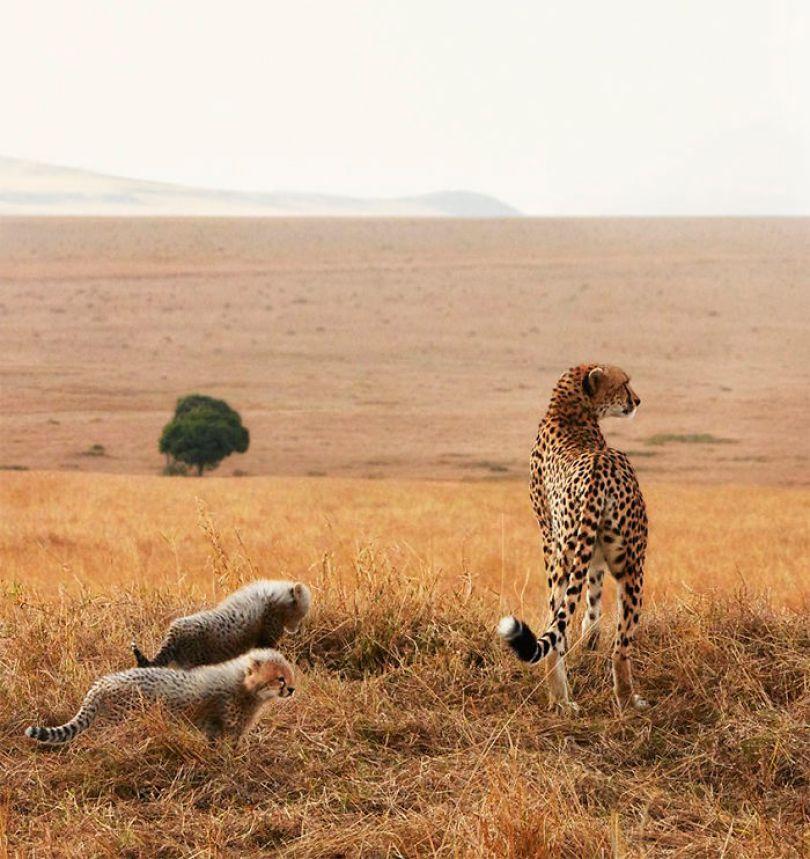 5c136d162fa2d endangered animals tim flach 5a45f9c2db4c7  700 - Fotos Incríveis de animais que podem em breve ser extintos
