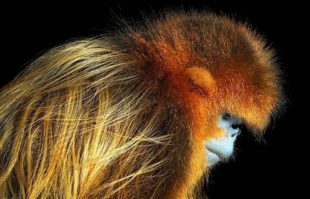 5c136d176d411-endangered-animals-tim-flach-5a45feb0c7625__700 This Photographer Took Pictures Of Animals That Could Soon Be Extinct And This Might Be Your Last Chance To See Them Photography Random