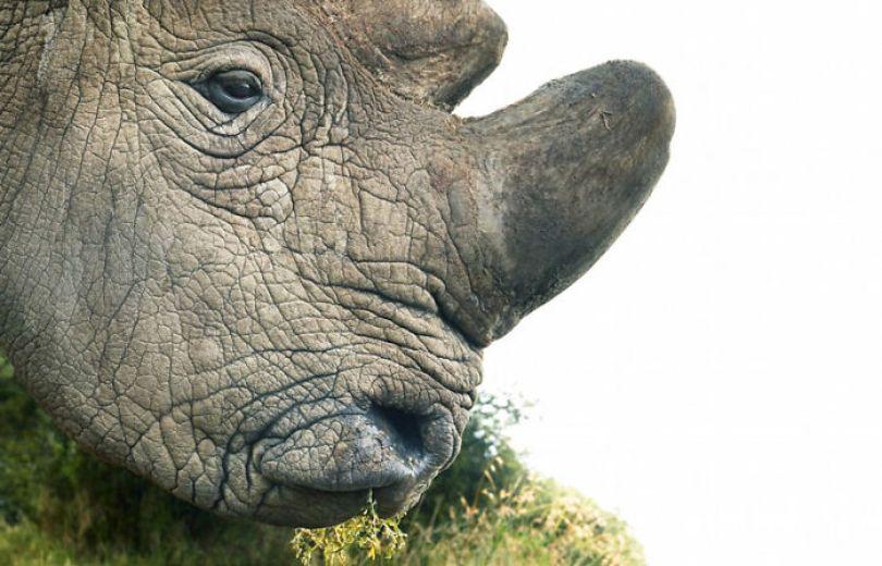 5c136d17e5030 endangered animals tim flach 5a45f86a562bc  700 - Fotos Incríveis de animais que podem em breve ser extintos