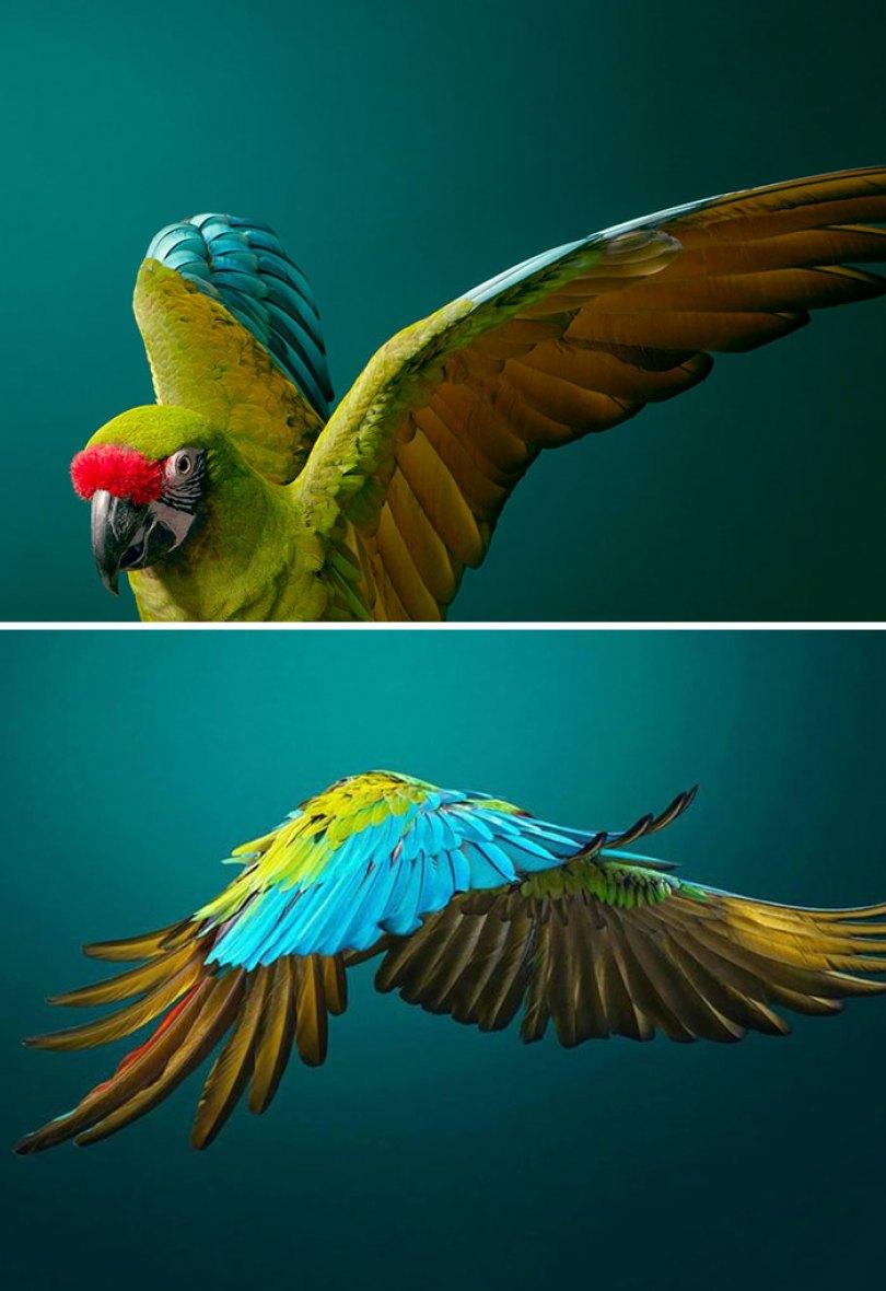 5c136d180f03d endangered animals tim flach 5a45f602f3626  700 - Fotos Incríveis de animais que podem em breve ser extintos