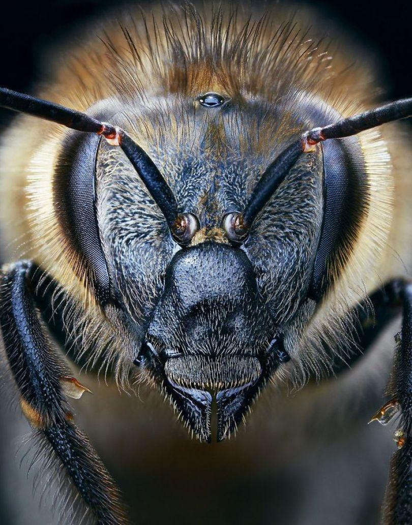 5c136d1830893 endangered animals tim flach 5a45fb7c85174  700 - Fotos Incríveis de animais que podem em breve ser extintos