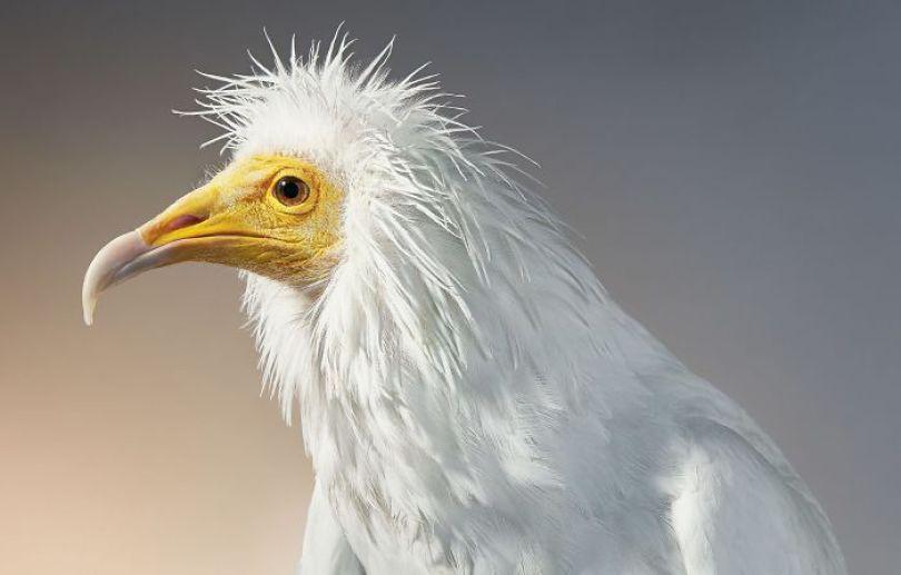 5c136d18530bf endangered animals tim flach 5a45f675a68cb  700 - Fotos Incríveis de animais que podem em breve ser extintos