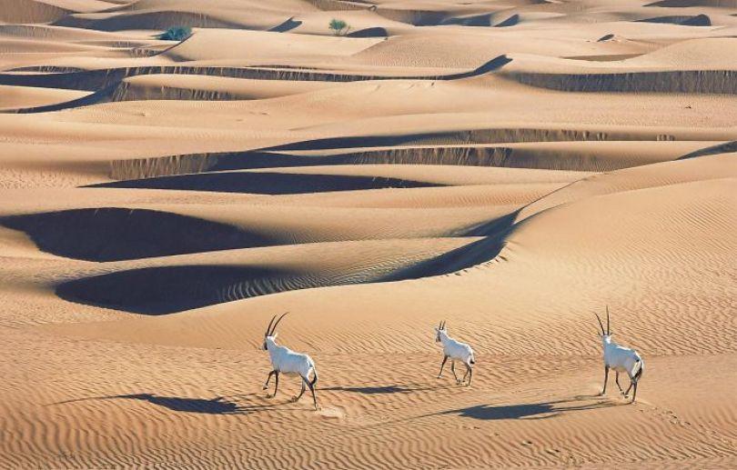 5c136d1960f2a endangered animals tim flach 5a45fa8bdc160  700 - Fotos Incríveis de animais que podem em breve ser extintos