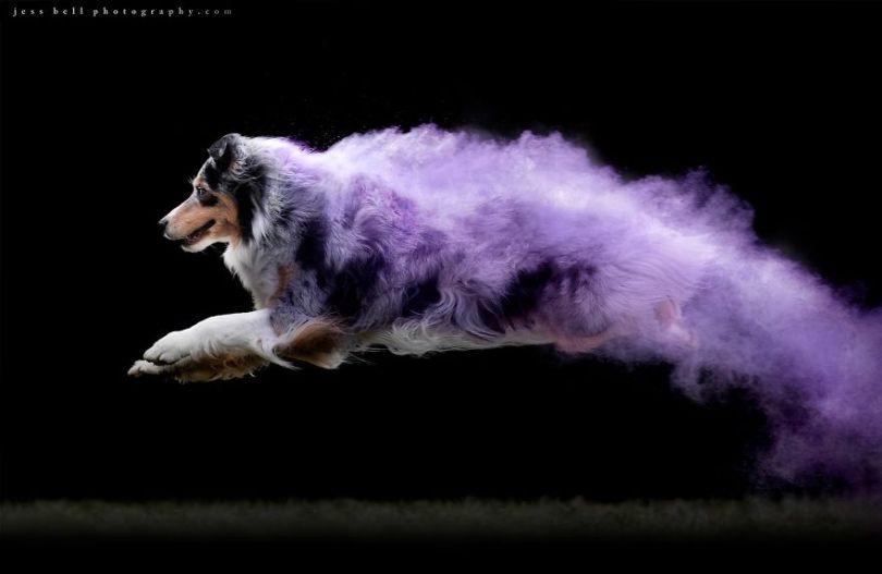 5c41e16d7a2d1 49807068 1429892153808177 4302527271664615424 o 5c3f4b163b5a2  880 - Fotógrafo jogou pó colorido em cachorros e as fotos você precisa ver