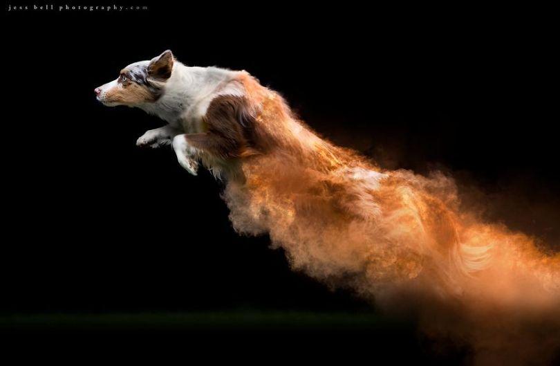 5c41e16d96f08 This Canadian photographer tossed powder on some dogs and made something amazing 5c3f504b2de7e  880 - Fotógrafo jogou pó colorido em cachorros e as fotos você precisa ver