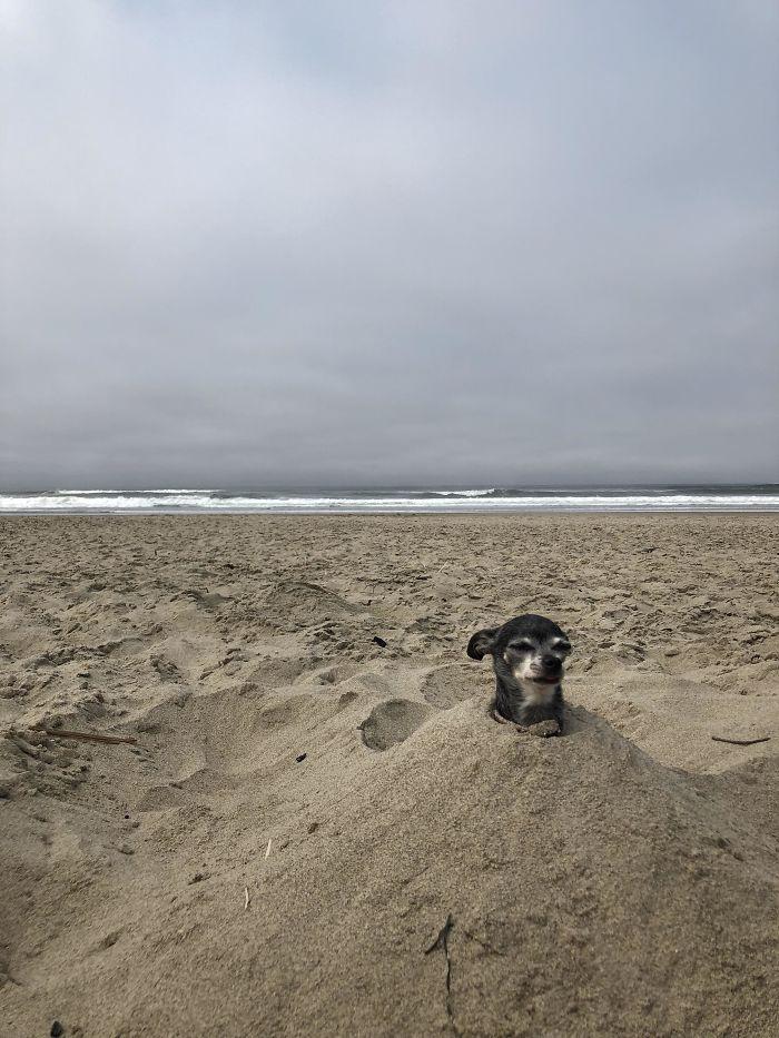 5cfa4712305eb 5b694018e2c05 gzss4x1pkje11  700 - Coisas interessantes que as pessoas encontraram na praia