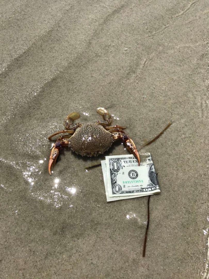5cfa4712b43d7 5b6adab97ec0c fk2krtrvs0dz  700 - Coisas interessantes que as pessoas encontraram na praia