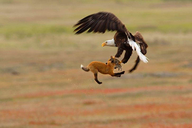 audubon photography awards 2019 winners 3 - Os vencedores dos prêmios Audubon Bird Photography 2019 foram anunciados