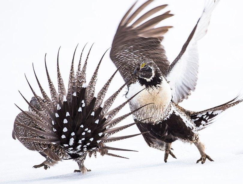 audubon photography awards 2019 winners 4 - Os vencedores dos prêmios Audubon Bird Photography 2019 foram anunciados