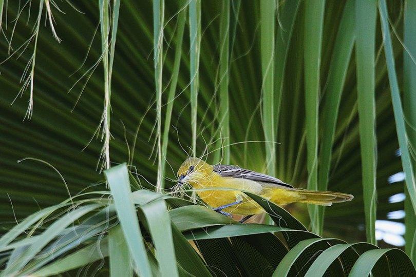 audubon photography awards 2019 winners 5 - Os vencedores dos prêmios Audubon Bird Photography 2019 foram anunciados