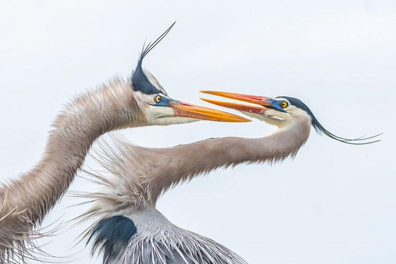 audubon photography awards 2019 winners 9 - Os vencedores dos prêmios Audubon Bird Photography 2019 foram anunciados