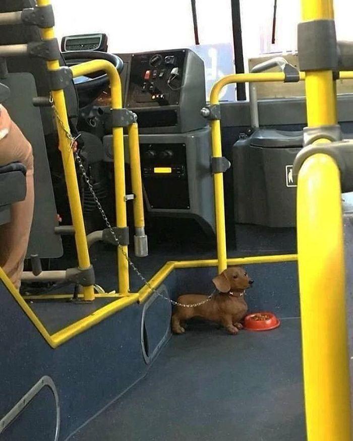 5dc3d4babb74c BkAO 3thumE png  700 - Conta do Instagram compartilha as coisas mais estranhas do transporte público