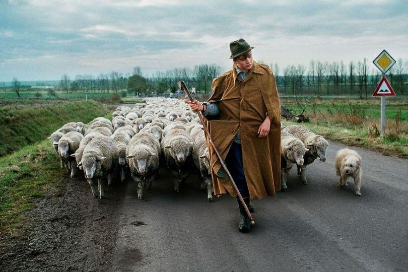 5dce5d23f02b5 x 5dc9e2656711d  880 - 40 fotografias de Steve McCurry que exploram a relação entre humanos e animais