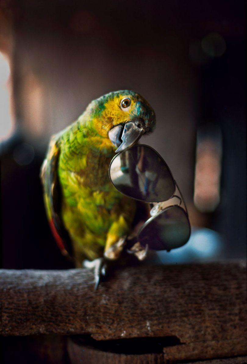 5dce5d2582d62 x 5dc9dac608f8c  880 - 40 fotografias de Steve McCurry que exploram a relação entre humanos e animais