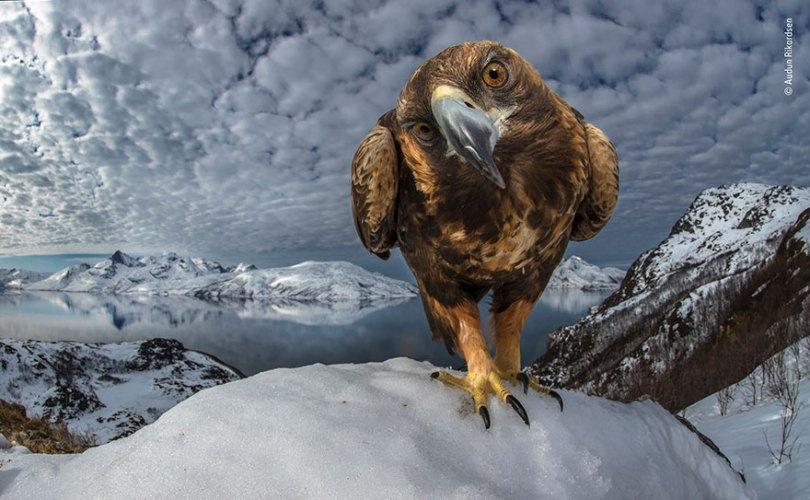 5def5c3484e9e wildlife photographer of the year lumix peoples choice awards 2019 finalists 20 5dee1c7d33c1c  880 - Fotos incríveis da People's Choice do concurso de fotógrafo de vida selvagem 2019