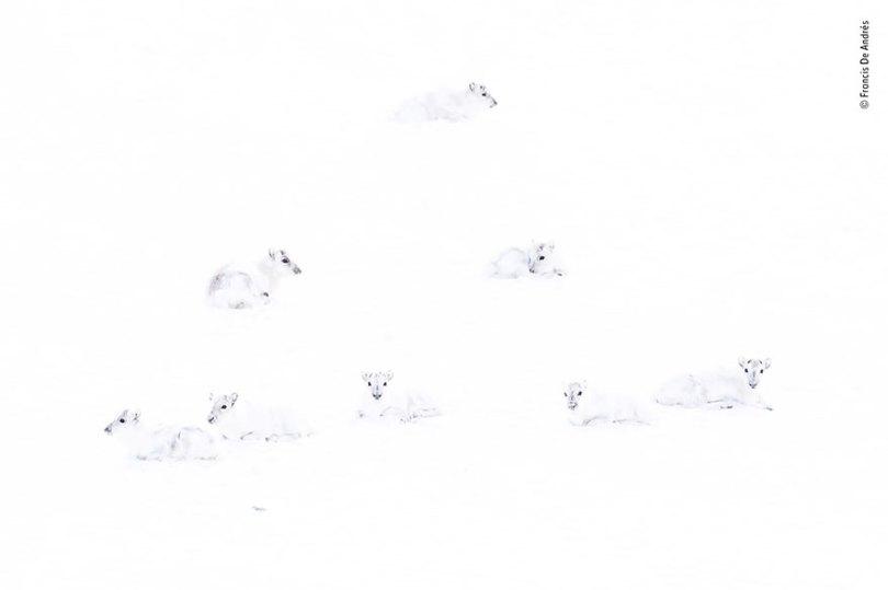 5def5c3572787 wildlife photographer of the year lumix peoples choice awards 2019 finalists 21 5dee1c7e968a5  880 - Fotos incríveis da People's Choice do concurso de fotógrafo de vida selvagem 2019