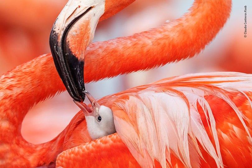 5def5c360d685 wildlife photographer of the year lumix peoples choice awards 2019 finalists 6 5dee1c63c2f1c  880 - Fotos incríveis da People's Choice do concurso de fotógrafo de vida selvagem 2019
