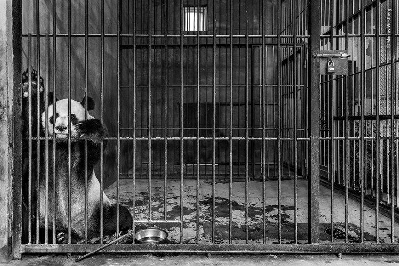 5def5c364b189 wildlife photographer of the year lumix peoples choice awards 2019 finalists 18 5dee1c7a00f48  880 - Fotos incríveis da People's Choice do concurso de fotógrafo de vida selvagem 2019