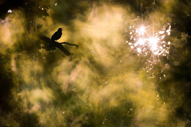 5eb2623facf3a gdt nature photographer of the year 2020 5eb1144ce28ac  880 - As melhores fotografias da Natureza - Concurso GDT 2020