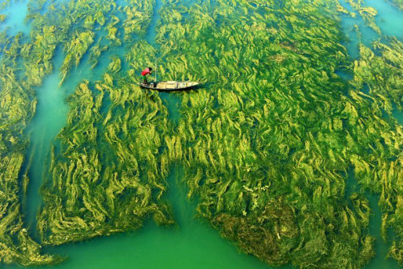 5ee3287c0e8ba 10 5ee1deece469a  700 - Fotógrafa Oceanógrafa de Baleias ganha prêmio principal de 120 mil dólares