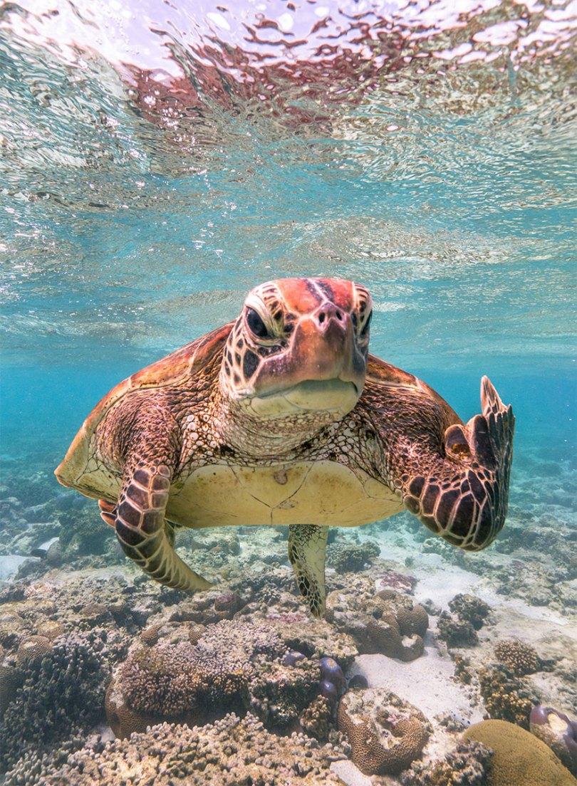 5f5b7bb33df90 25 5f5a1e388bfb6  880 - As fotos mais fofas e engraçadas de 2020 do mundo animal!