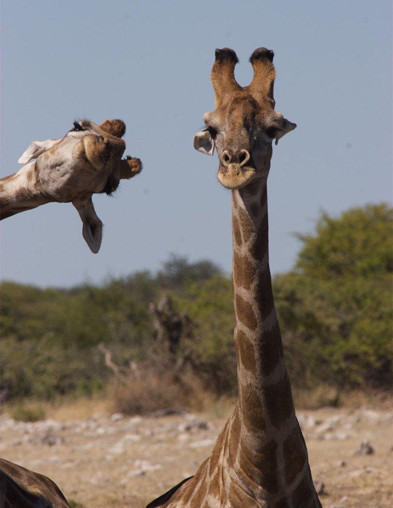 5f5b7bb36dcf2 5 5f5a1663a4e3d  880 - As fotos mais fofas e engraçadas de 2020 do mundo animal!