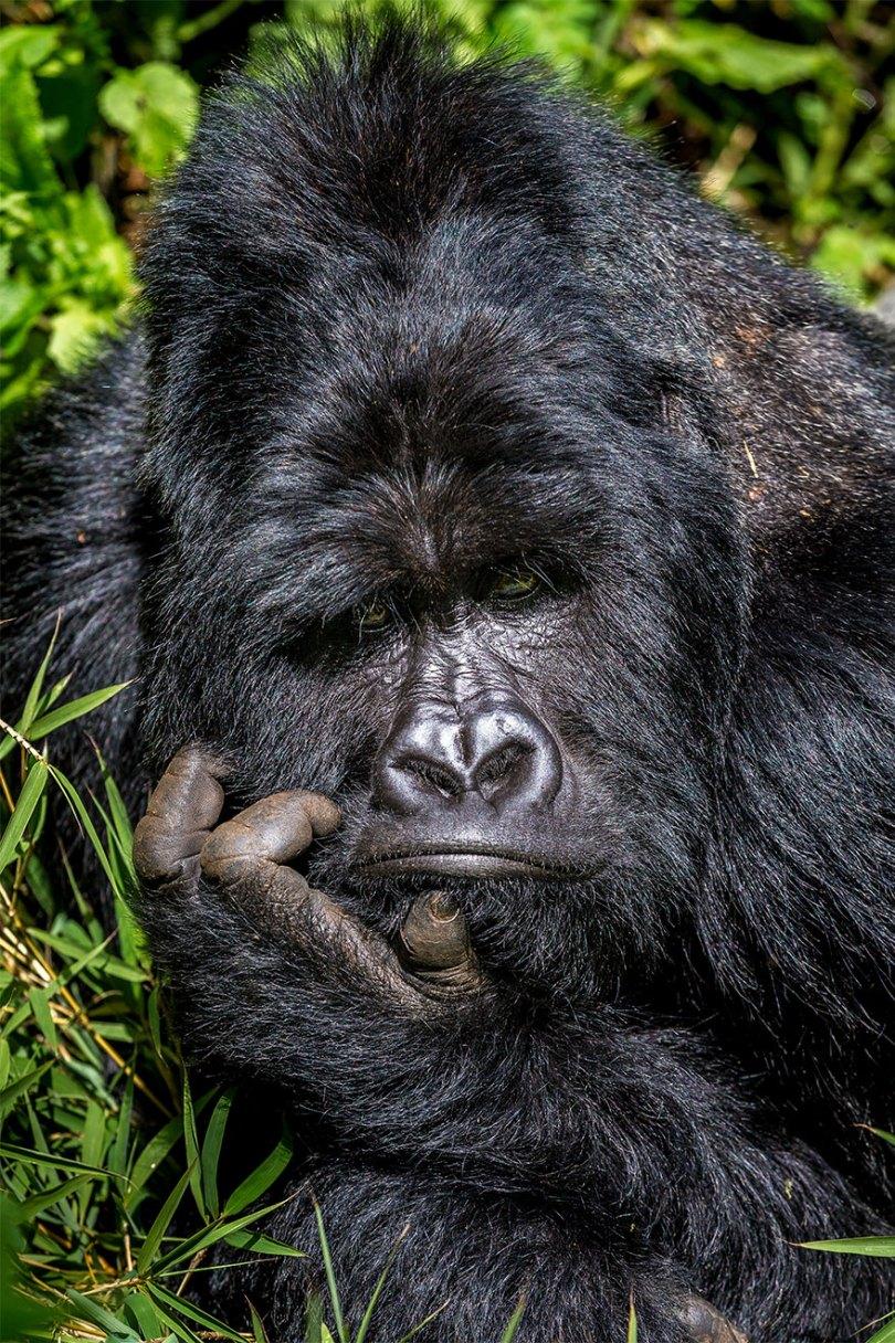 5f5b7bb758645 24 5f5a1e0dcff11  880 - As fotos mais fofas e engraçadas de 2020 do mundo animal!