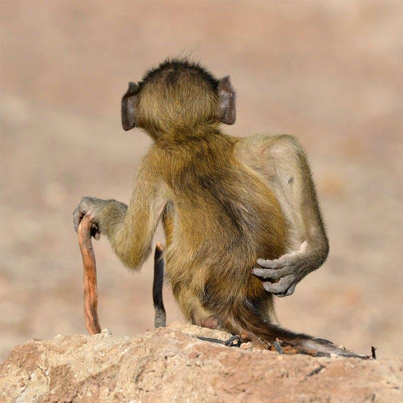 5f5b7bb87249b 26 5f5a1e6f2d864  880 - As fotos mais fofas e engraçadas de 2020 do mundo animal!