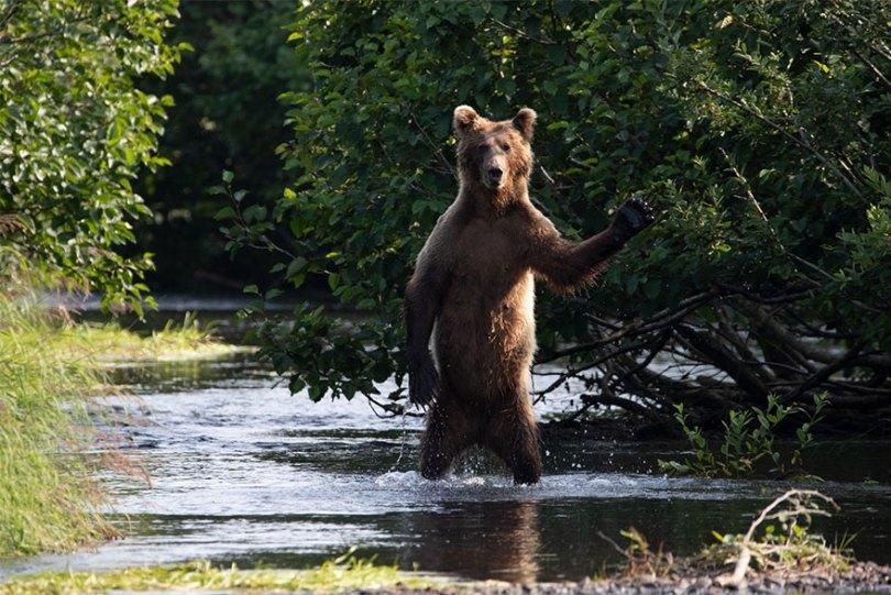 5f5b7bbab0108 9 5f5a176270652  880 - As fotos mais fofas e engraçadas de 2020 do mundo animal!