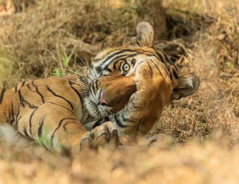 5f5b7bbf041bb 15 5f5a191dc029e  880 - As fotos mais fofas e engraçadas de 2020 do mundo animal!
