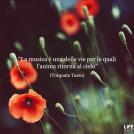 Aforisma T.Tasso