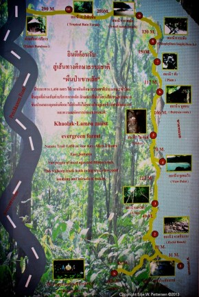 Nature trail, Khao Lak-Lam Ru national park