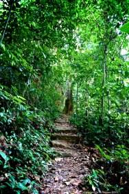 Nature walk, Khao Lak-Lam Ru national park