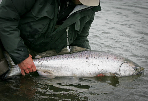 Alaska West King Salmon