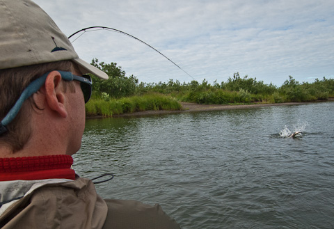 Humpy Salmon at Alaska West