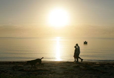 Beach, boat, sun, dog.  Any questions?  Photo: Ric Fogel