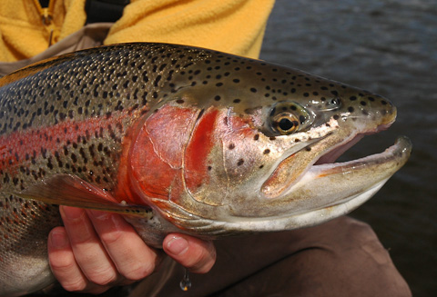Trout Fishing at Alaska West