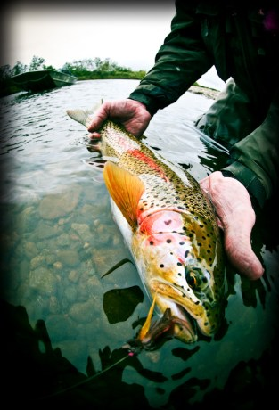 Rainbow Trout Tips