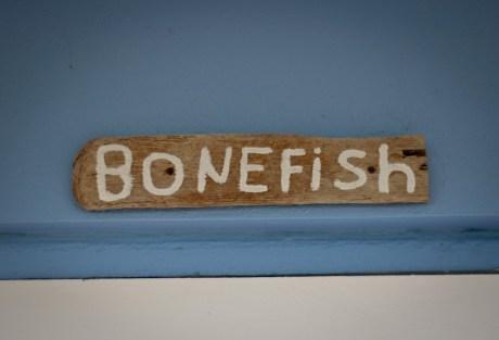 Cheap Bonefishing Trips